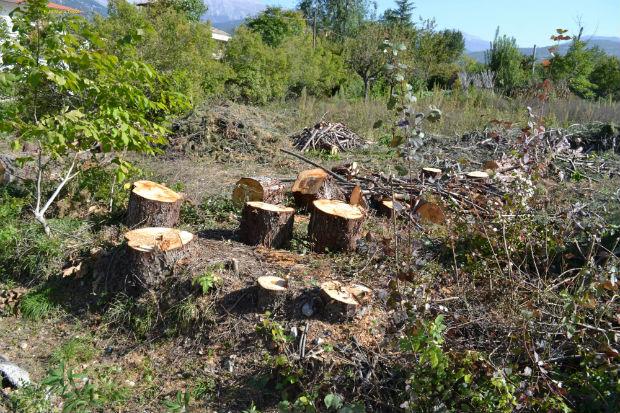 taglioalberi_foto6mariatrozzi_21-10-2012