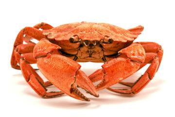 Crab-copy
