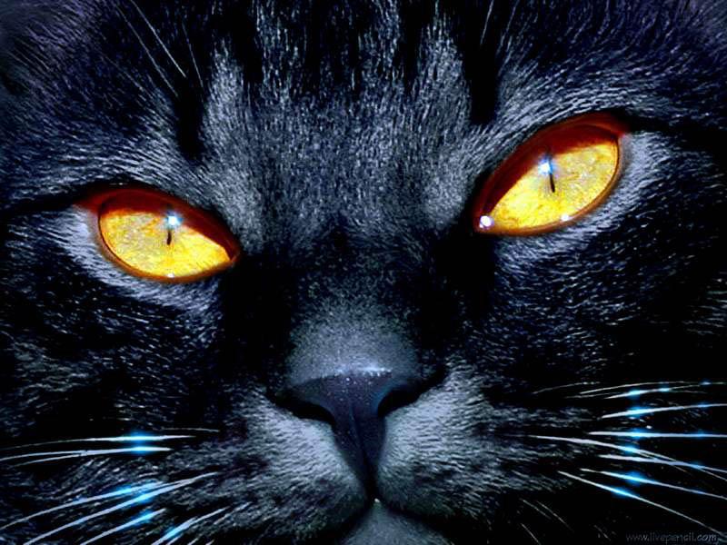 gatto-nero-occhi-gialli